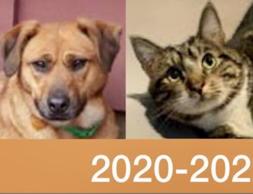 2020-2021 Annual Appeal